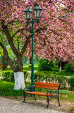 Cherry blossom in city park. Wooden bench and lantern under the branches of Sakura tree Stock Photography