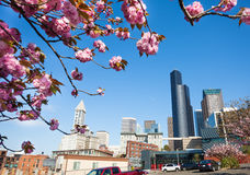 Cherry blossom and city view of Seattle downtown Royalty Free Stock Photography
