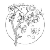 Cherry blossom coloring book vector illustration Stock Photography