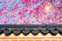 Cherry Blossom con el tejado del templo en primavera Foto de archivo libre de regalías