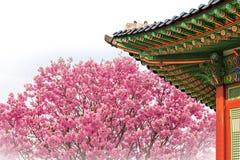 Cherry Blossom con el tejado del templo en primavera Imágenes de archivo libres de regalías