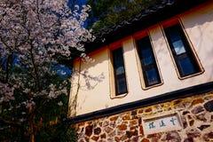 Cherry Blossom dal, wuxi, porslin royaltyfri foto
