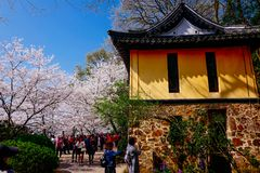 Cherry Blossom dal, wuxi, porslin royaltyfri bild