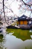 Cherry Blossom dal, wuxi, porslin royaltyfria bilder