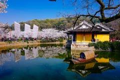 Cherry Blossom dal, wuxi, porslin arkivfoton