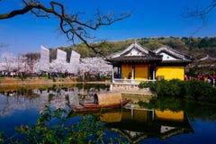 Cherry Blossom dal, wuxi, porslin royaltyfri fotografi