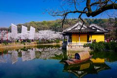 Cherry Blossom dal, wuxi, porslin royaltyfria foton