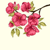Cherry Blossom De bloemen van Sakura Bloemen achtergrond Tak met bloemen Stock Fotografie