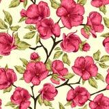Cherry Blossom De bloemen van Sakura Bloemen achtergrond Tak met p Royalty-vrije Stock Fotografie