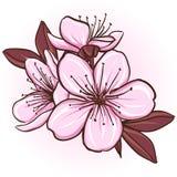 Cherry blossom. Decorative floral illustration of sakura flowers stock illustration