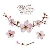 Cherry Blossom Design. Royalty Free Stock Photo