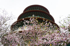 Cherry Blossom e tempio sul cielo cludy Immagine Stock Libera da Diritti