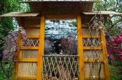Cherry Blossom en el jardín por la bahía Foto de archivo libre de regalías
