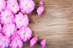 Cherry Blossom en viejos antecedentes de madera. Fotografía de archivo