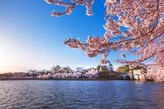 Cherry Blossom Festival öppningsbroportar mellan den tidvattens- handfatet och Potomacet River i Washington DC, USA royaltyfri foto
