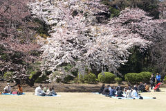 Cherry blossom festival Royalty Free Stock Images
