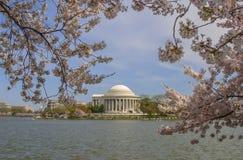 Cherry Blossom Festival i Washington D.c. Arkivbild