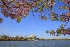 Cherry Blossom Festival i Washington D.c. Royaltyfri Foto