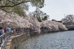 Cherry Blossom Festival i Washington, DC Arkivfoto