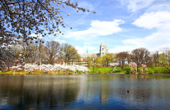 The Cherry Blossom Festival in New Jersey Royalty Free Stock Image