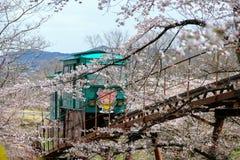 Cherry Blossom Festival no parque da ruína do castelo de Funaoka, Shibata, Miyagi, Tohoku, Japão em April12,2017: Carro da inclin Imagens de Stock