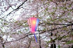 Cherry Blossom Festival no parque de Omiya, Saitama, Japão em abril 9,2017: Lanterna colorida de Sakura Festival Fotos de Stock