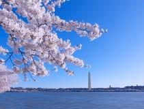 Cherry Blossom Festival på ottan på den tidvattens- handfatet i Washington DC, USA arkivbilder