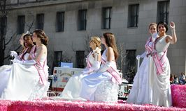 Cherry Blossom Festival Parade Royalty-vrije Stock Foto