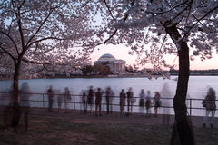 Cherry Blossom Festival - Washington, D.C. Stock Images