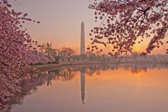 Cherry Blossom Festival in Washington, DC fotografia stock