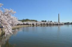 Cherry Blossom Festival Washington, DC Imágenes de archivo libres de regalías