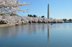 Cherry Blossom Festival Washington DC Lizenzfreie Stockbilder