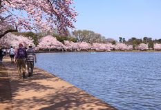 Cherry Blossoms Festival Washington DC Stock Photos