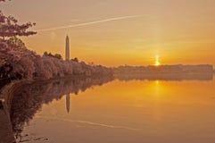 Cherry Blossom Festival in Washington, gelijkstroom Royalty-vrije Stock Afbeelding