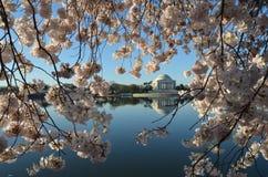 Cherry Blossom Festival Washington, gelijkstroom Royalty-vrije Stock Foto