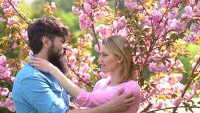 Cherry Blossom Festivals Tips Coppie nell'amore Coppie di preludio nell'amore Cherry Blossom Festival Amanti che hanno sessuale stock footage