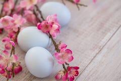 Cherry Blossom filialer med blå kulör påsk för tre pastell eg. Royaltyfria Foton