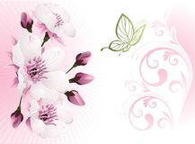 Cherry blossom with floral background Stock Image
