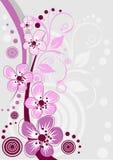 Cherry Blossom, flores de Sakura Foto de archivo