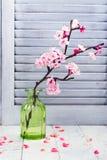 Cherry Blossom Flores rosadas de Sakura Primavera o concepto del día de las mamáes Imagenes de archivo