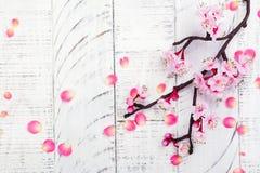 Cherry Blossom Flores rosadas de Sakura Primavera o concepto del día de las mamáes Fotografía de archivo