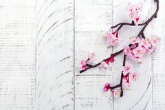 Cherry Blossom Flores rosadas de Sakura Primavera o concepto del día de las mamáes Fotografía de archivo libre de regalías
