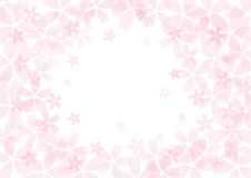 Cherry Blossom flower background in pink Stock Photo