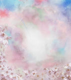 Cherry blossom flower oil painting Stock Photo