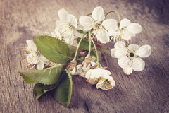 Cherry blossom flower on old wood table Stock Photography