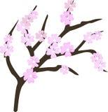 Cherry blossom flowers element. Sakura pink flowers. And branch vector illustration