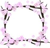 Cherry blossom flowers frame. Sakura pink flowers frame royalty free illustration
