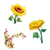 Cherry blossom flowers with leaves. Tree branch. Illustration of Cherry blossom flowers with leaves. Tree branch and sunflowers Stock Photography