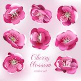 Cherry blossom flowers. Vector set. Stock Photos