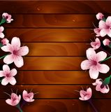 Cherry blossom flowers on wood background Stock Photo